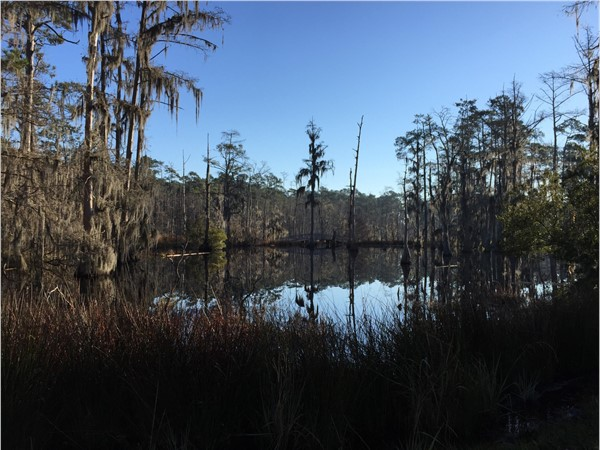 Sam Houston Jones State Park invites you into nature with walking paths and bridges over ponds
