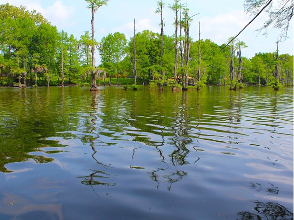 This peaceful view of Bayou DeSiard in the spring is absolutely beautiful