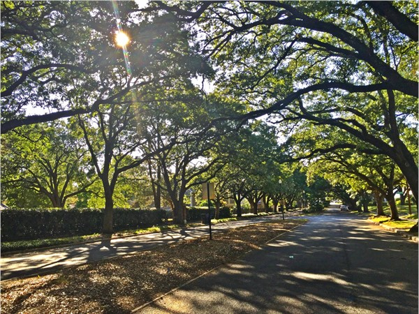 Beautiful tree lined streets add to the charm of the neighborhood